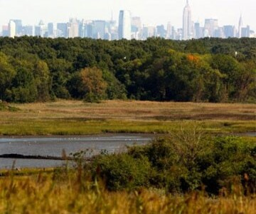 Marsh with city