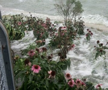 Flooding Flowers